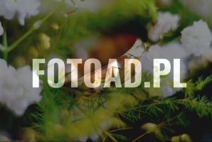FOTOAD.PL